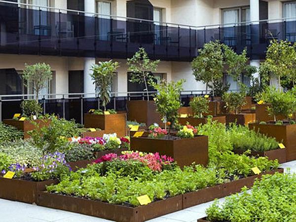 Orto sul balcone eco idee for Fiori da terrazzo