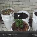 irrigazione-fai-da-te