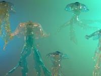 meduse-pet