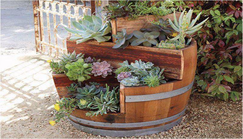 Botte fioriera - Sughero pianta da giardino ...